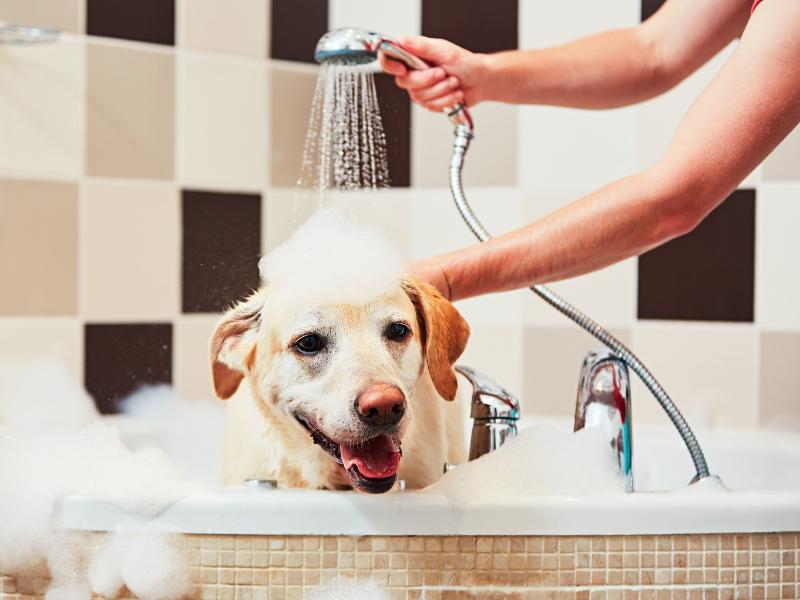 Rutina de belleza de perros y gatos: productos naturales para su bienestar