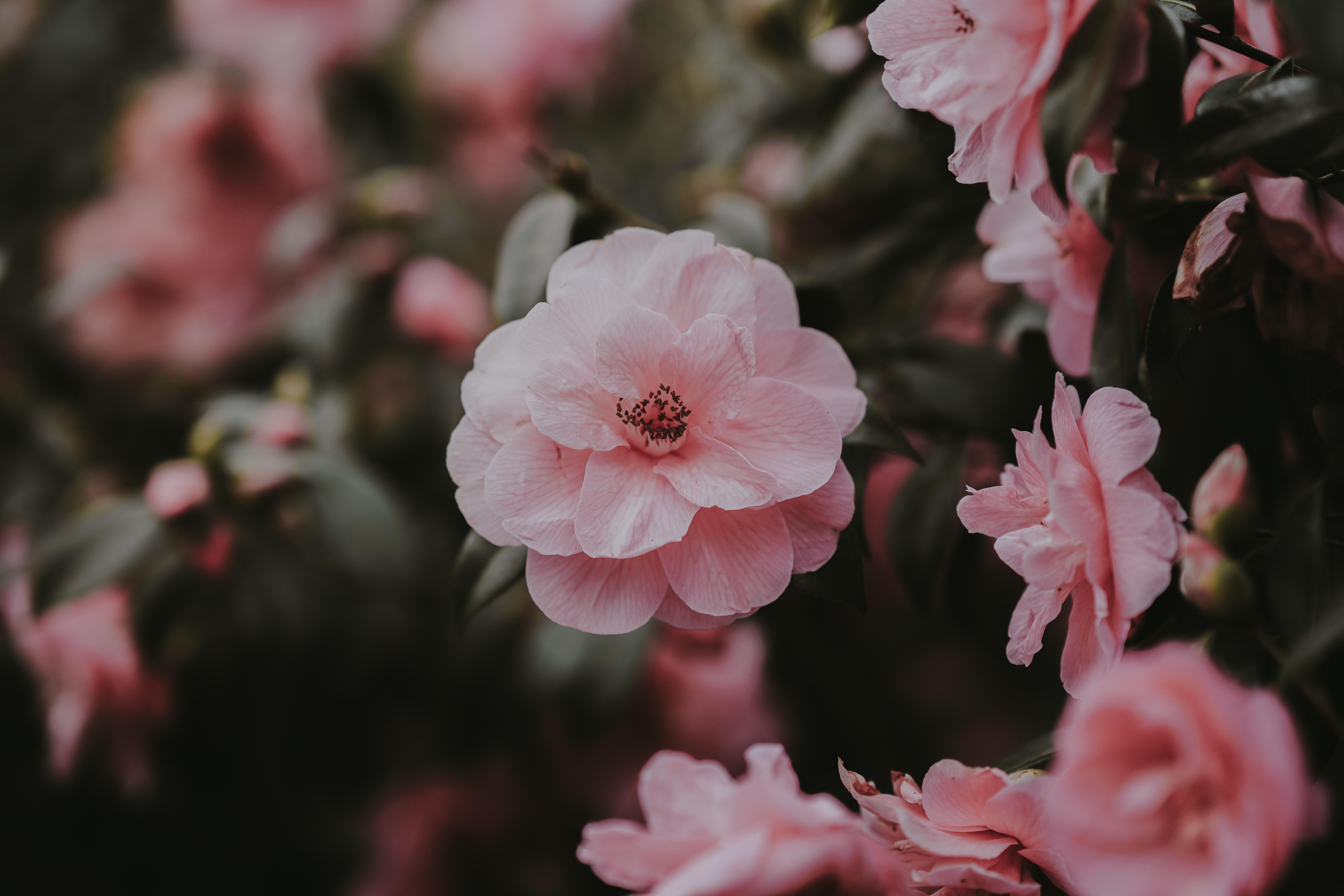 Cosmetica coreana: la naturalezza degli ingredienti