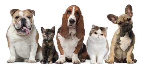 Prodotti per la cura del cane e del gatto